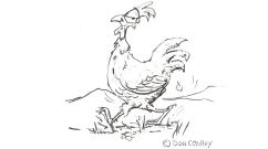 free-range-hen_484x270px_cropped