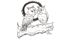 owls-happy-anniversary_484x270px_cropped